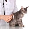 Ветеринарные клиники в Старице
